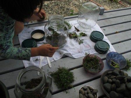 Terrarium making planting
