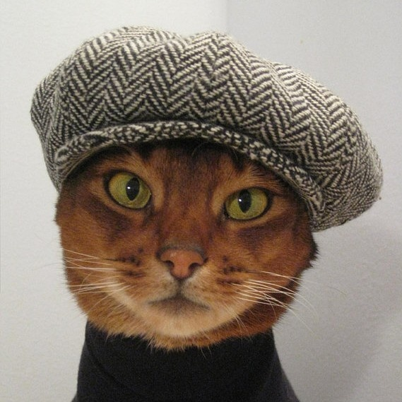 jaunty: Cats, Hats, Hipster, Cool Cat, Newsboy Cap, Head Of Garlic, Home Crafts, Film Music Books, Animal