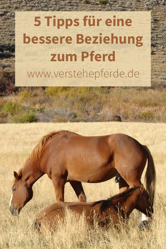 Eine bessere Beziehung zum Pferd, Vertrauen, Harmonie: In diesem Post gebe ich fünf Tipps für  gutes Horsemanship.