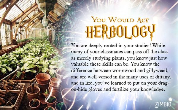 Which Hogwarts Class Would You Ace?