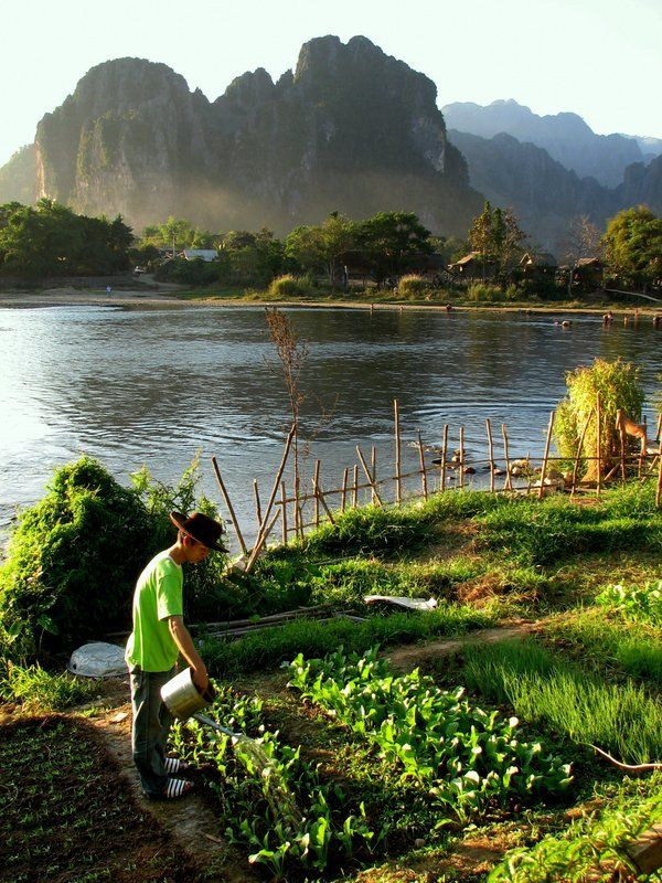 Organic Garden, Van Vieng Laos ... I can so do this here in NZ!! :))