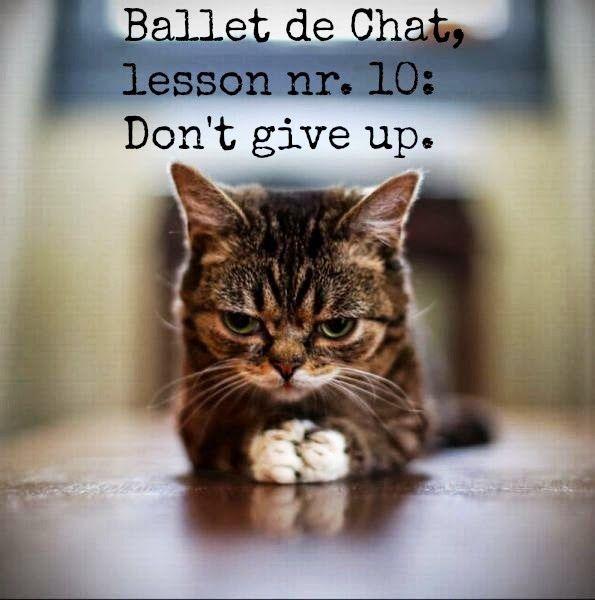 Don't give up. --@Rachel Triplett Til You Drop: Ballet de Chat, The Lessons