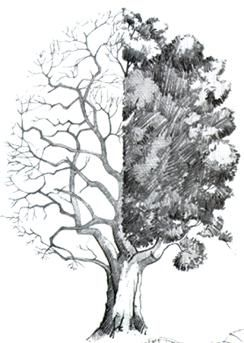 Como dibujar paisaje a lapiz, dibujo a lapiz de paisajes, tutorial de dibujo a lapiz, como dibujar el mar, como dibujar arboles, como dibujar perspectiva