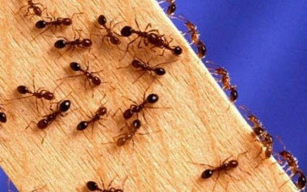 Tα πάντα όλα εδώ News !: Πώς να εξαφανίσετε τα μυρμήγκια από το σπίτι !