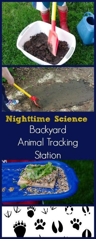 cool science experiments, STEM challenge, nighttime science experiment, science activities for elementary, middle school and preschool, kindergarten, homeschool science