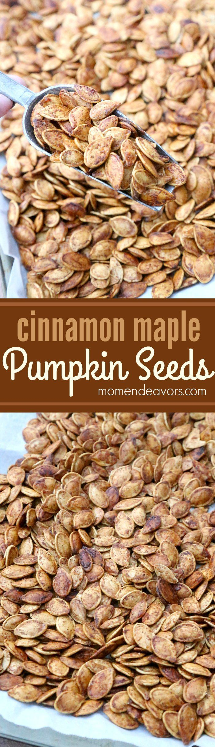 Roasted cinnamon maple pumpkin seeds - a delicious & healthy fall snack recipe!