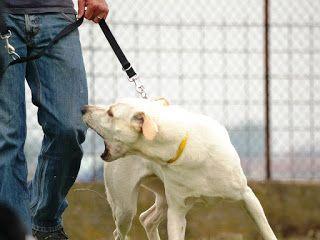 Domestici Animali: I cani più difficili da addestrare I cani sono, s...