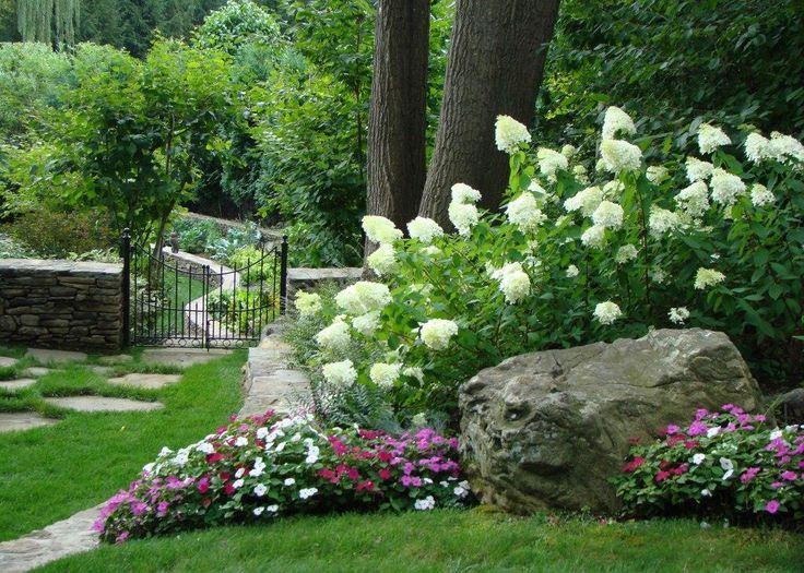 limelight hydrangea garden | Limelight Hydrangeas in one of my landscapes - Jan Johnsen