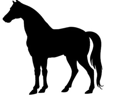 Hard to fit for Short Backed horses Guide