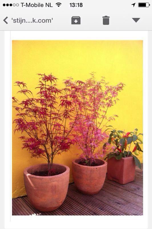 Mooi deze kleuren, voor bij mijn gele muur