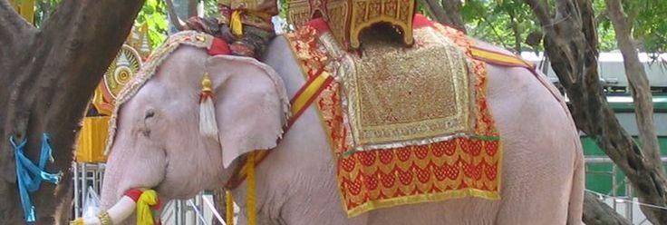 TOURISTS URGED TO RETHINK ELEPHANT RIDES