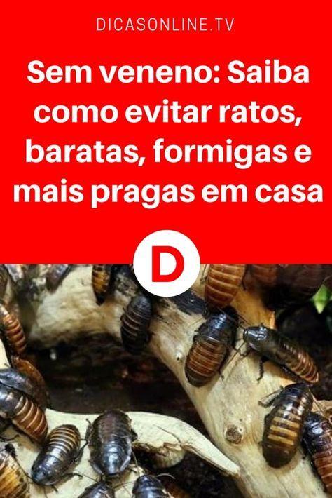 Pragas urbanas | Sem veneno: Saiba como evitar ratos, baratas, formigas e mais pragas em casa | Casa limpa é sinônimo de saúde