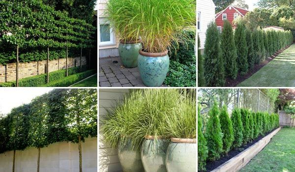 Add Privacy to Your Garden or Yard with Plants