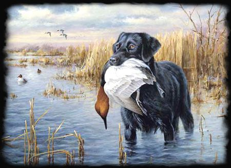 Duck Hunting Dogs, Your Hard Working Partner | The-Hunting-Dog.com