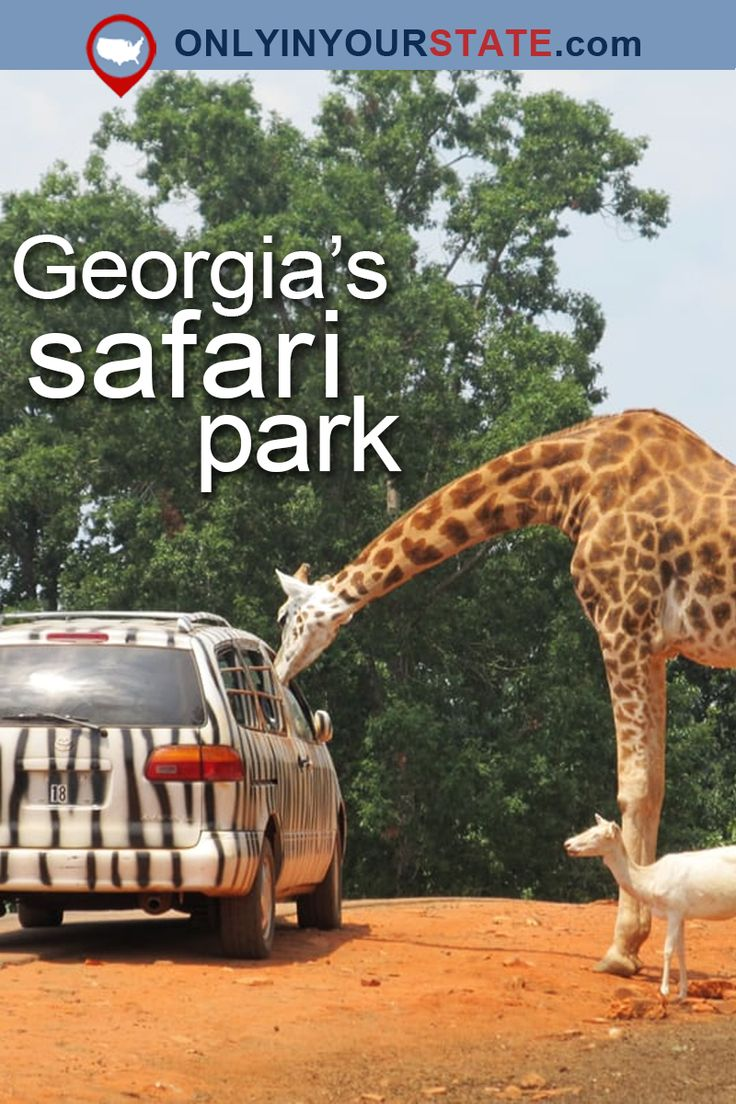 Travel | Georgia | Attractions | USA | Unique Park | Hidden Gems | USA | Pine Mountain | Safari | Animal Park | Day Trips | Places To Visit | Things To Do | Animal Safari | Family Fun | Zoo | Adventure
