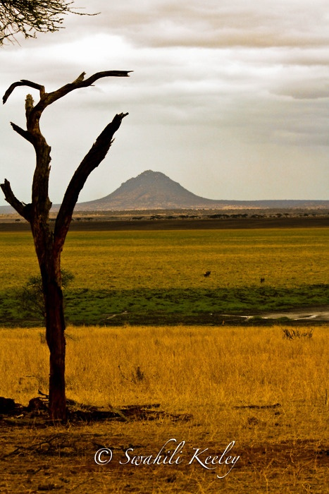 Tarangire hill, Tarangire National Park, Tanzania