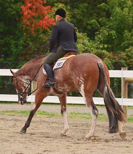 Hunters Under Saddle Training Checklist