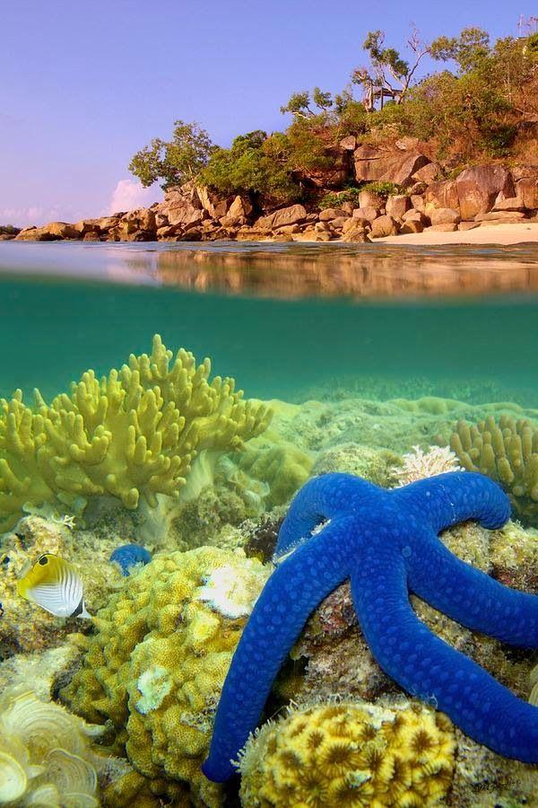 Blue Starfish, Lizard Island, Great Barrier Reef Australia