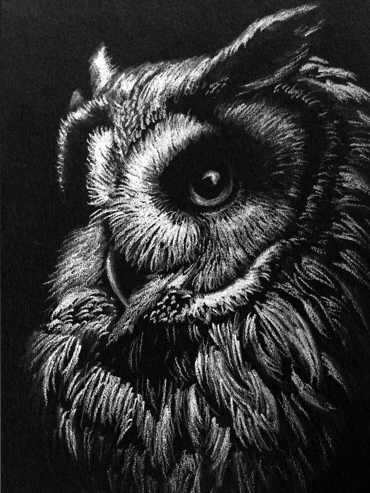 White charcoal sketch by mealieart.com