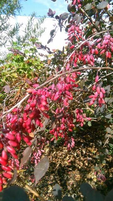 Stromy a keře | Bylinky pro radost - Part 2
