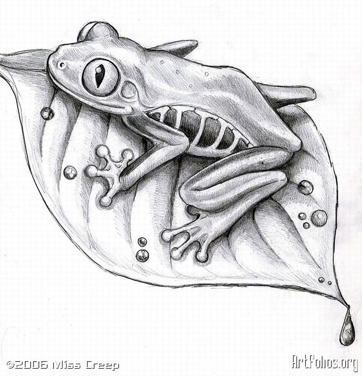 Red Eyed Tree Frog Sketch of a froggie I did.