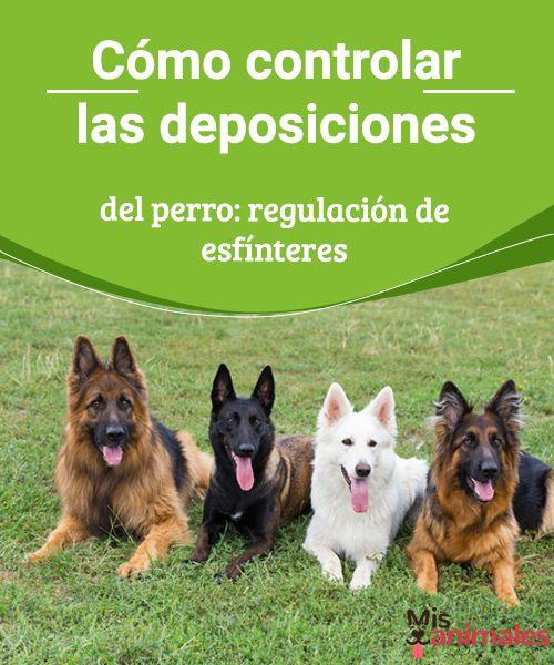 Cómo controlar las deposiciones del perro: regulación de esfínteres  A continuación os damos algunos consejos para controlar las deposiciones del perro. A diferencia de los gatos, los perros no nacen con el instinto de saber cuál es el lugar adecuado para hacer sus necesidades. #esfínteres #perro #control #consejos