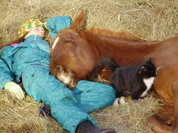 siestaSleepy Time, Except, Best Friends, Take A Breaking, The Farms, Sweets Dreams, Happy Pictures, Naps Time, Animal