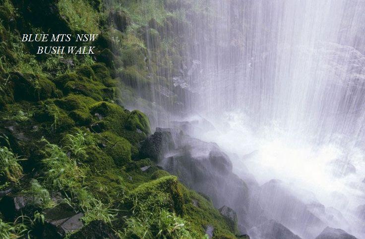 Blue Mountains bush walk & Waterfall