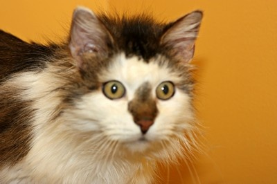 Welkin is lookin' for a playful home! Check him out at hatsweb.org!