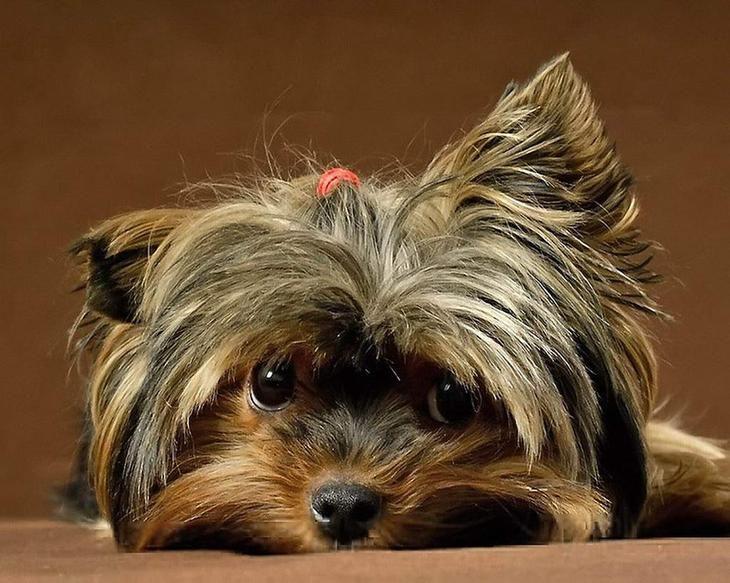 NewPix.ru - Мордашки. Красивые фотографии собак