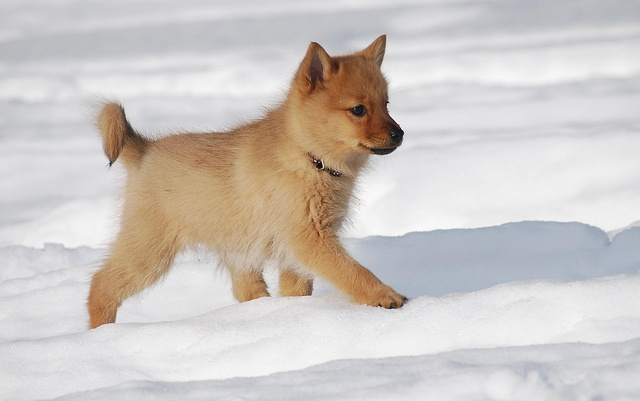 pup in the snow !!