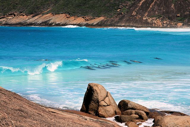 Dolphins surfing, Hellfire Bay, Cape Le Grand National Park, Esperance, Western Australia photo owl cottage