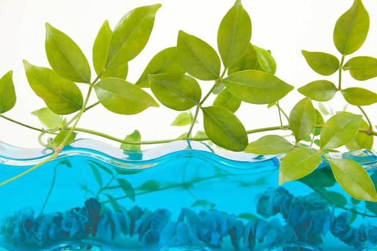 La culture hydroponique, une réelle solution au problème de mal-nutrition? Vous trouverez des astuces, des conseils et des systèmes de cultures sur http://www.terraterra.be