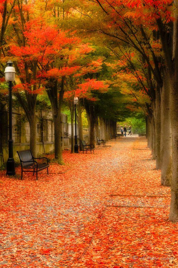 Red Carpet, Princeton NJ  - USA - by yuko kudos on 500px