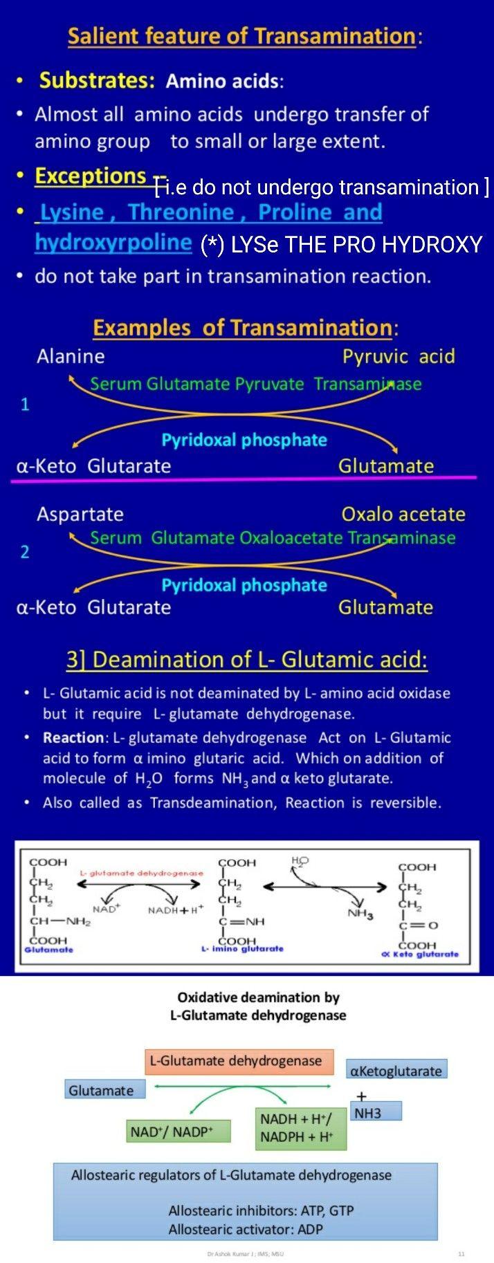 Transamination & Deamination of Glutamic acid ... v.imp ... #Alpha Ketoglutarate