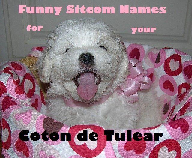 best 25 funny dog names ideas on pinterest funny dog