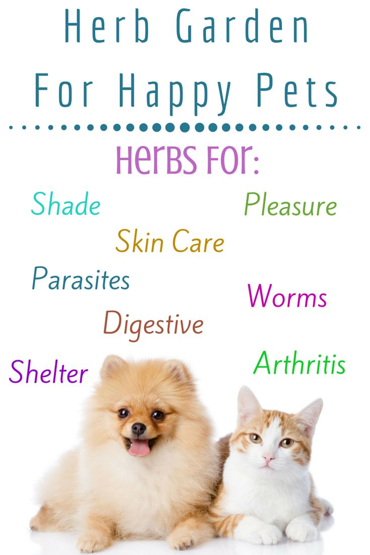Herbs are just as beneficial for animals as they are for people. There are herbs that act as tonics.