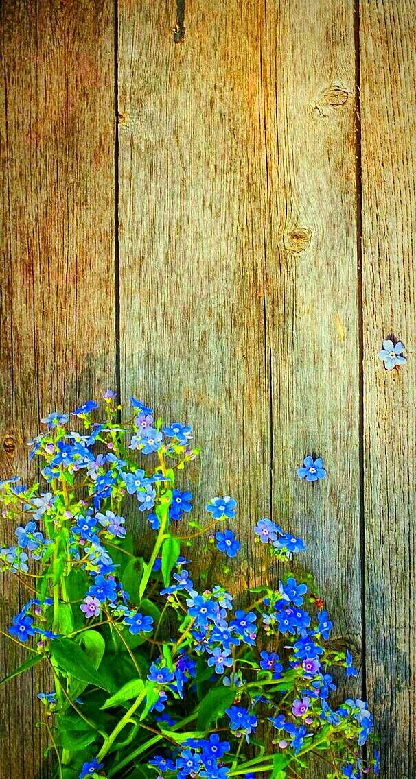 Pin Oleh Nini Di Flowers Latar Belakang Latar Belakang Abstrak Wallpaper Ponsel