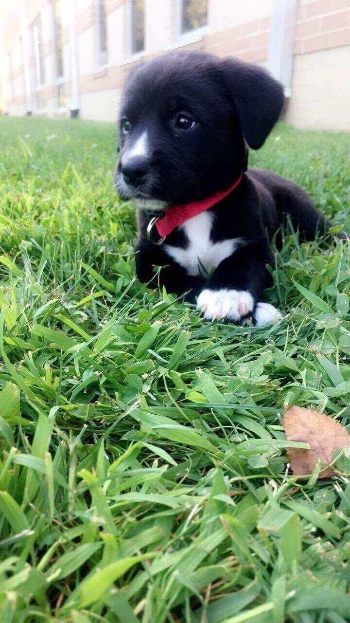 Puppy needs a name! She's a boxer mastiff mix  http://ift.tt/2veLdKu
