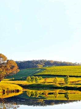 Great wine drives-Orange, NSW
