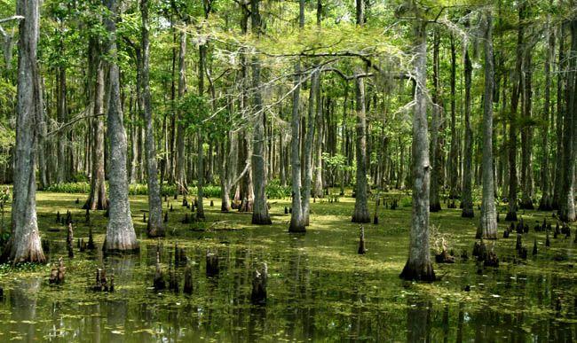 Louisiana Scenery Beautiful Louisiana Sw...