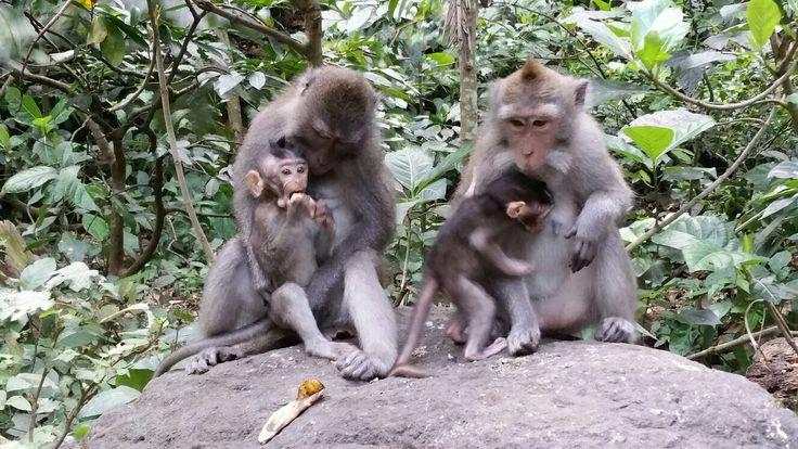 Cutest monkeys