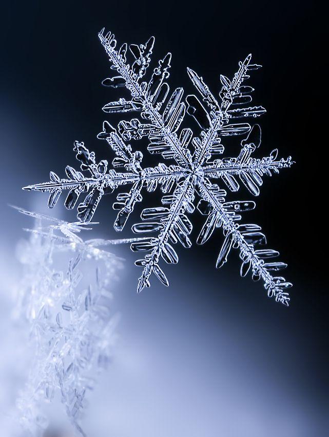 Macro photo of a snowflake by Ondrej Pakan.
