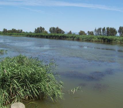 Riu Ebre