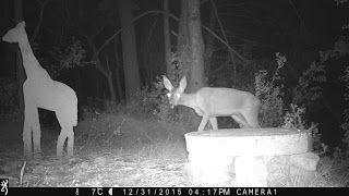 Wild Wood en Provence: roe deer