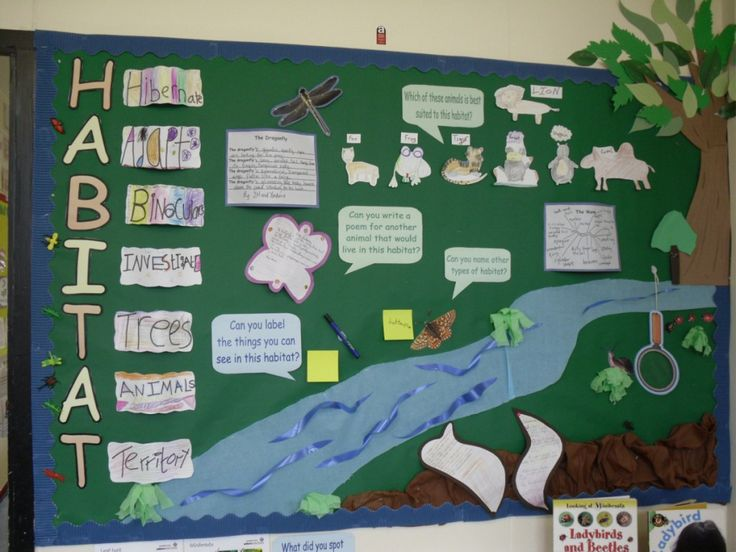 Habitat Bulletin Board- This is a good example of a simple board you could have the class work together to create. It could be taken a step farther and have students in groups create different boards that are examples of habitats.