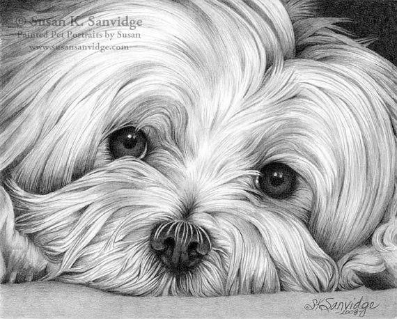 Realistic Hand Drawn 8x10 Graphite Pet by SusanKSanvidgeArt