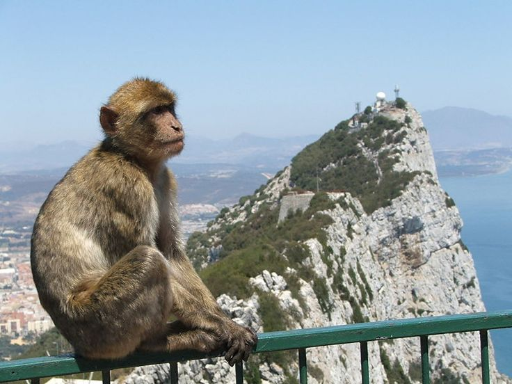 Gibraltar--any place that's beautiful AND has monkeys is alright with me!