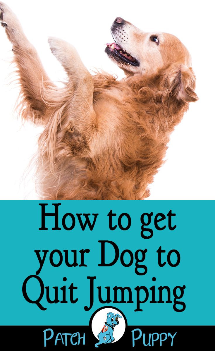 How to get your dog to quit jumping training your dog