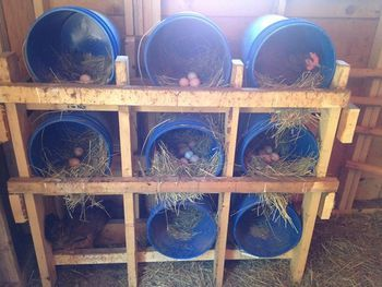 Our [Cheap] Log Chicken Coop - BackYard Chickens Community